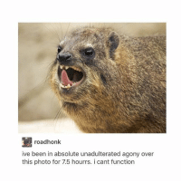 Memes, 🤖, and Teeth: AT roadhonk  ive been in absolute unadulterated agony over  this photo for 7.5 hourrs. i cant function tfw ur trying to get out a piece of popcorn that's been stuck in ur teeth for the past century - Max textpost textposts