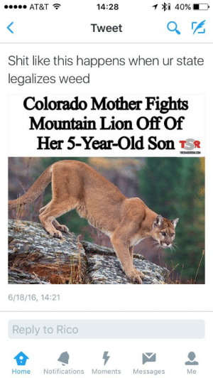 Toke or Flight reaction: AT&T  14:28  Tweet  a  Shit like this happens when ur state  legalizes weed  Colorado Mother Fights  Mountain Lion Off Of  Her 5-Year-Old Son Ts*  THESHADERDOM.CONM  6/18/16, 14:21  Reply to Rico  Home Notifications Moments Messages  Me Toke or Flight reaction