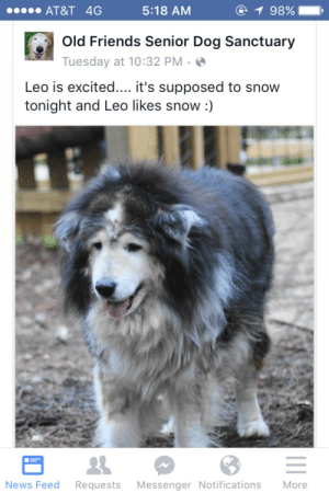 Friends, News, and At&t: AT&T 4G  5:18 AM  98% ,  Old Friends Senior Dog Sanctuary  Tuesday at 10:32 PM .  Leo is excited.... it's supposed to snow  tonight and Leo likes snow :)  News Feed Requests Messenger Notifications More
