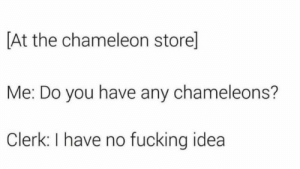 No Fucking Idea: [At the chameleon store]  Me: Do you have any chameleons?  Clerk: I have no fucking idea