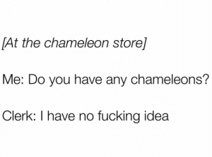me_irl : me_irl: [At the chameleon store]  Me: Do you have any chameleons?  Clerk: I have no fucking idea me_irl : me_irl
