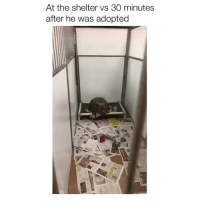 Memes, 🤖, and Shelter: At the shelter vs 30 minutes  after he was adopted zzz