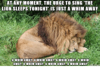 Lion: ATANY MOMENT, THE URGE TO SING THE  LION SLEEPS TONIGHT IS JUST A WHIM AWAY  A WHIM AWAY A WHIM AWAY A WHIM AWAY, A WHIM  AWAY A WHIM AWAY A WHIM AWAY, A WHIM AWAY