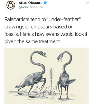 "indirispeaks:  justicewitch:  ameliaglitter: I saw this and thought of @fleamontpotter.  OP HOW CAN YOU NOT ADD THE BEST PART OF THIS TWEET THREAD  : Atlas Obscura  @atlasobscura  Paleoartists tend to ""under-feather""  drawings of dinosaurs based on  fossils. Here's how swans would look if  given the same treatment. indirispeaks:  justicewitch:  ameliaglitter: I saw this and thought of @fleamontpotter.  OP HOW CAN YOU NOT ADD THE BEST PART OF THIS TWEET THREAD"