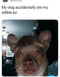 <p>Rico got ahold of the stash (via /r/BlackPeopleTwitter)</p>: atoUhI2C  My dog accidentally ate my  edible lol <p>Rico got ahold of the stash (via /r/BlackPeopleTwitter)</p>