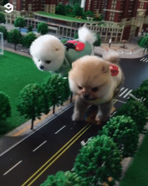 Dank, Giant, and 🤖: Attack on giant pom