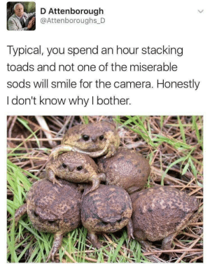 Meirl: Attenborough  @Attenboroughs D  Typical, you spend an hour stacking  toads and not one of the miserable  sods will smile for the camera. Honestly  I don't know why I bother. Meirl