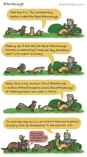 Wholesome David Attenborough comic on Facebook I found via /r/wholesomememes https://ift.tt/2YXnj4I: Attenborough  birdandmoon.com  And here it is. This extraordinary  creature is called the David Attenborough.  Standing over 5 feet tall, the David Attenborough  consumes an astonishing 3 meals per day, and dresses  itself with superb accuracy  Sadly, there is only one knoun David Attenborough  in existence. Attempts to capture a se cond David Atten borough  for breeding purposes have ended in failure.  Our best hopes may now lie in an initiative that aims to attract  breeding stock by broadcasting its characteristic calls  Omnivores!  They're the  most adaptable  animals in. Wholesome David Attenborough comic on Facebook I found via /r/wholesomememes https://ift.tt/2YXnj4I