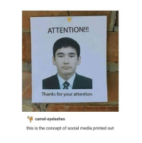 Memes, 🤖, and Media: ATTENTION!!!  Thanks for your attention  camel eyelashes  this is the concept of social media printed out T B H - Max textpost textposts