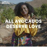 America, Love, and Memes: attn:  ALLAVOCADOS  DESERVE LOVE The real reason why avocados are so popular in America today.
