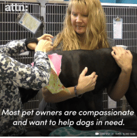 Dogs, Memes, and Bank: attn  Most pet owners are compassionate  and want to help dogs in need  COURTESY OF TAMPA BLOOD BANK There is a great need for canine blood. Your dog could save lives.
