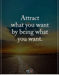 Memes, 🤖, and What You Want: Attract  what you want  by being what  you want.  POSITIVE Attract what you want by being what you want. positiveenergyplus