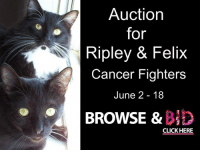 Auction  for  Ripley & Felix  Cancer Fighters  June 2- 18  BROWSE &  CLICK HERE My furiends Ripley and Felix are having an auction.  Take a look!