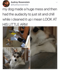 Chill, Instagram, and Love: Audrey Rosensteiin  @Audreyrosenstei  my dog made a huge mess and then  had the audacity to just sit and chill  while i cleaned it upi mean LOOK AT  HIS LITTLE ARM Follow @dapperdaze if you love Instagram ❤️😂