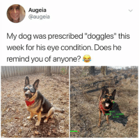 "Hello, Life, and Memes: Augeia  @augeia  My dog was prescribed ""doggles"" this  week for his eye condition. Does he  remind you of anyone?  TALK  STAY If u aren't following the hottest account in 2018 @kalesalad, then what the Hello r u even doing with ur life"