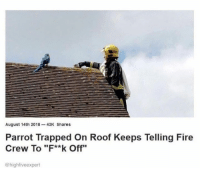 """Fire, Parrot, and August: August 14th 2018-43K Shares  Parrot Trapped On Roof Keeps Telling Fire  Crew To """"F**k Off""""  @highfiveexpert"""