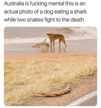 Fucking, Funny, and Love: Australia is fucking mental this is an  actual photo of a dog eating a shark  while two snakes fight to the death Those snakes are in love though mate.
