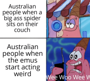 A war we cannot win by n1GG99 MORE MEMES: Australian  people when a  big ass spider  sits on their  couch  Australian  people when  the emus  start acting  weird  Wee Woo Wee W A war we cannot win by n1GG99 MORE MEMES