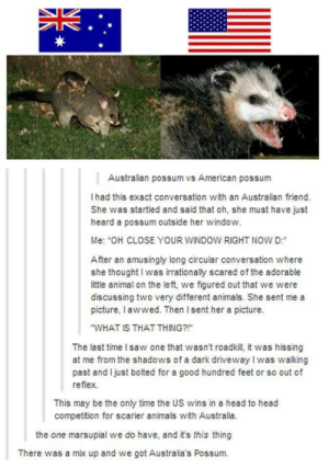 "Australian possum vs American possum: Australian possum vs American possum  I had this exact conversation with an Australian friend.  She was startled and said that oh, she must have just  heard a possum outside her window.  Me: ""OH CLOSE YOUR WINDOW RIGHT NOW D:  After an amusingly long circular conversation where  she thought I was irrationally scared of the adorable  little animalon the left, we figured out that we were  discussing two very different animals. She sent me a  picture, l awwed. Then Isent her a picture.  WHAT IS THAT THING?  The last time I saw one that wasn't roadkill, it was hissing  at me from the shadows of a dark driveway I was walking  past and Ijust bolted for a good hundred feet or so out of  reflex  This may be the only time the US wins in a head to head  competition for scarier animals with Australia.  the one marsupial we do have, and it's this thing  There was a mix up and we got Australia's Possum. Australian possum vs American possum"