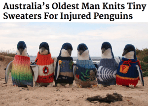 sweaters: Australia's Oldest Man Knits Tiny  Sweaters For Injured Penguins