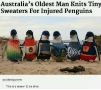 Alive, Penguins, and Reason: Australia's Oldest Man Knits Tiny  Sweaters For Injured Penguins  accidenttpprone  This is a reason to be alive. <p>HOW SWEET ❤</p>
