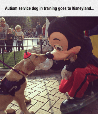 srsfunny:  What A Nice Encounter: Autism service dog in training goes to Disneyland... srsfunny:  What A Nice Encounter