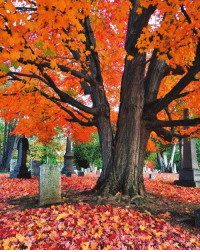 autumn-dreamin: westeastsouthnorth:  North Cemetery, West Hartford, Connecticut, USA (taken by westeastsouthnorth)   🍁autumn-dreamin🍁 : autumn-dreamin: westeastsouthnorth:  North Cemetery, West Hartford, Connecticut, USA (taken by westeastsouthnorth)   🍁autumn-dreamin🍁