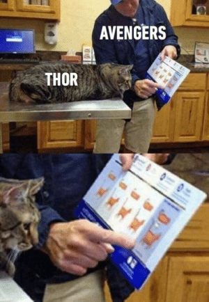 Dank, Avengers, and Ice Cream: AVENGERS  THOR Melted ice cream.