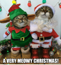 Merry Christmas from all of us to all of you!  (image source - https://www.facebook.com/pages/My-Furry-Babies/1443530449231481 ): AVERY MEOWY CHRISTMAS!  Caption by Kittyworks Merry Christmas from all of us to all of you!  (image source - https://www.facebook.com/pages/My-Furry-Babies/1443530449231481 )