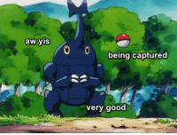 <p>Catch Pls</p>: aw yis  being captured  very good <p>Catch Pls</p>