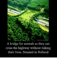 Animals, Memes, and Cross: awake spiritual  A bridge for animals so they can  cross the highway without risking  their lives. Situated in Holland 😍🐾🦊🦌🐹🐻 awakespiritual goodvibes positivity