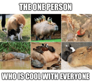 awesomacious:  Capybaras are good role models: awesomacious:  Capybaras are good role models