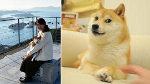 awesomacious:  KYM Interviews Atsuko Sato, The Owner Of The Internet's Favorite Shiba Inu, Doge: awesomacious:  KYM Interviews Atsuko Sato, The Owner Of The Internet's Favorite Shiba Inu, Doge