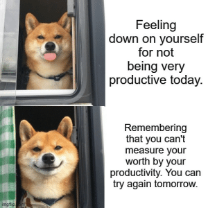 awesomacious:  Listen to the shiba! Just do your best every day, but don't let negative thoughts stop you from trying again tomorrow!: awesomacious:  Listen to the shiba! Just do your best every day, but don't let negative thoughts stop you from trying again tomorrow!