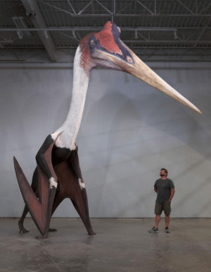 Tumblr, Animal, and Blog: awesomacious:  Quetzalcoatlus northropi model next to a 1.8m man. The largest known flying animal ever exist.