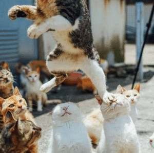 Tumblr, Blog, and Http: awesomacious:  The great cat escape.