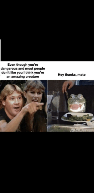 awesomacious:  We need more Steve Irwin's in this world: awesomacious:  We need more Steve Irwin's in this world
