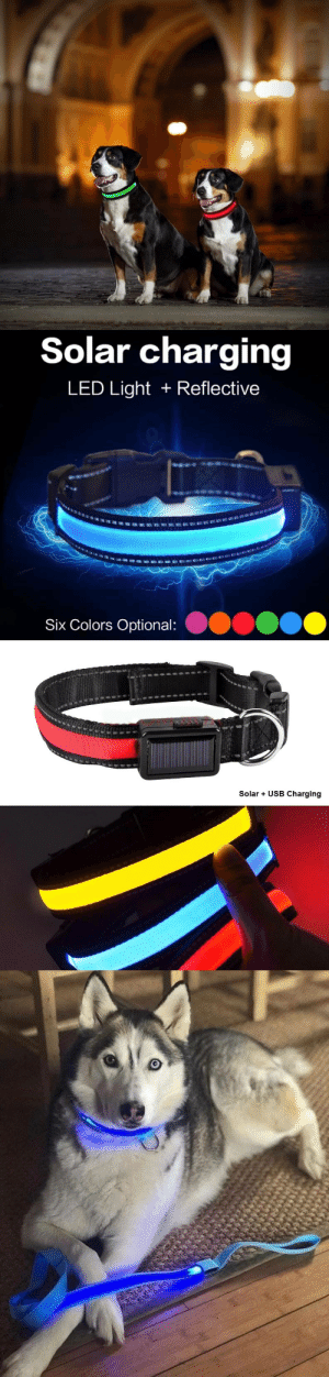 awesomage: Solar Powered Led Collar   Every year dogs are injured and even killed on our roads because a lack of awareness. If you truly love your dog or just want to improve their visibility, our Solar Powered LED collars are a MUST HAVE!   Our LED Collars enable you (and drivers) to locate your dog from just about anywhere!     WITH EVERY PRODUCT SOLD, YOU CONTRIBUTE TO HELPING  ABANDONED DOGS RESCUE PROGRAM     Free Shipping Worldwide  : awesomage: Solar Powered Led Collar   Every year dogs are injured and even killed on our roads because a lack of awareness. If you truly love your dog or just want to improve their visibility, our Solar Powered LED collars are a MUST HAVE!   Our LED Collars enable you (and drivers) to locate your dog from just about anywhere!     WITH EVERY PRODUCT SOLD, YOU CONTRIBUTE TO HELPING  ABANDONED DOGS RESCUE PROGRAM     Free Shipping Worldwide