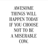 AWESOME  THINGS WILL  HAPPEN TODAY  IF YOU CHOOSE  NOT TO BE  A MISERABLE  COW.