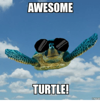 AWESOME  TURTLE!