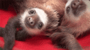 Tumblr, Blog, and Baby: awesomesthesia:  A Bucket Full Of Baby Sloths