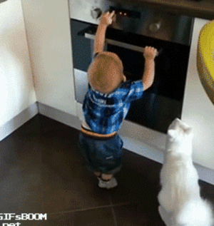 Tumblr, Blog, and Cat: awesomesthesia:  Cat Prevents Little Human From Getting Into Trouble