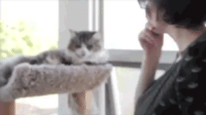 Tumblr, Blog, and How To: awesomesthesia:  How To Disable A Cat