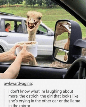 Crying, Reddit, and Girl: awkwardvagina:  i don't know what im laughing about  more, the ostrich, the girl that looks like  she's crying in the other car or the llama  in the mirror So Much Going On