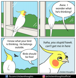 Free [OC]: Aww. I  wonder what  he's thinking?  I know what your bird  is thinking. He belongs  haha, you stupid hawk.  can't get me in here  outside.  Birds should  be free!  chicken thoughts  f fb.com/chickenthoughts  O@chickenthoughtsofficial Free [OC]