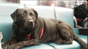 Aww look at this cutie loon what she does! (Seattle dog who takes the bus by HERSELF every day to visit her favorite dog park) (Note: I don't own this): Aww look at this cutie loon what she does! (Seattle dog who takes the bus by HERSELF every day to visit her favorite dog park) (Note: I don't own this)