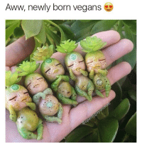 Aww @openlygayanimals . . . . vegan vegangoals veganaf veganfood healthyfood nutrition nutritionist happyfood veganlifestyle haha funny funnymemes funnypics hilarious hilariousmemes toofunny happy edgymemes bruh wtf memesdaily blacchyna kardashian kardashians earthy follow f4f 😂 ok: Aww, newly born vegans Aww @openlygayanimals . . . . vegan vegangoals veganaf veganfood healthyfood nutrition nutritionist happyfood veganlifestyle haha funny funnymemes funnypics hilarious hilariousmemes toofunny happy edgymemes bruh wtf memesdaily blacchyna kardashian kardashians earthy follow f4f 😂 ok