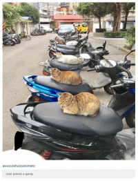 Funny, Lol, and Gang: awwcutefuzzyanimals:  Just joined a gang Funny Animal Pictures Cat seat warmers, what a great idea! Lol