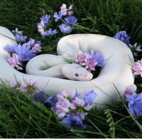 awwcutepets:  This precious danger noodle could be an Instagram model: awwcutepets:  This precious danger noodle could be an Instagram model