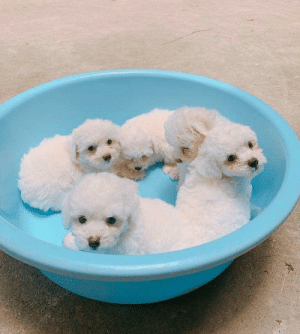 Awww My puppies are super cute I can't stop looking at them: Awww My puppies are super cute I can't stop looking at them